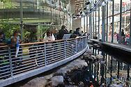 Visitors looking at tidepool exhibit at California Academy of Sciences, Golden Gate Park, San Francisco, California