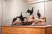 Cormorant group by Wendell Gilley