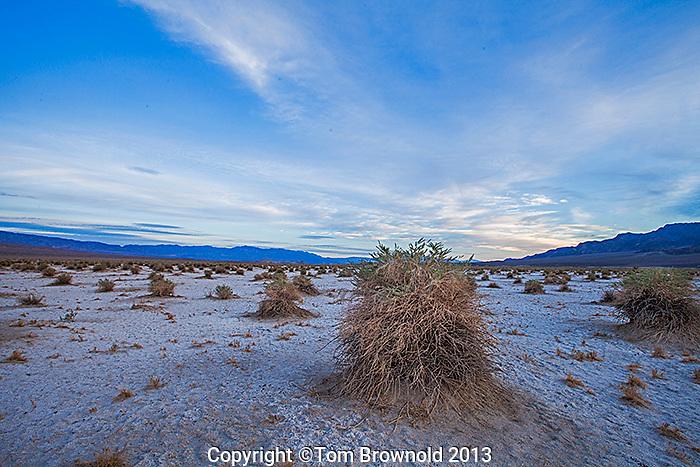 Devil's Cornfield in Salt Creek in Death Valley National Park