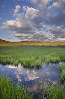 Wetlands in Stanley Basin, Sawtooth Mountains Idaho