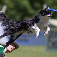 Amadea Colja of Slovenia competes with his dog Bora during the Flydogs Extreme Distance Frisbee European Championships held in  Budapest, Hungary. Saturday, 16. June 2012. ATTILA VOLGYI