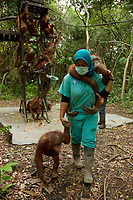 Ayu Budi Handayani, a vet from Jakarta, with a juvenile orangutan for transport back to their cages after a day in a patch of forest where they learned skills for the wild <br />