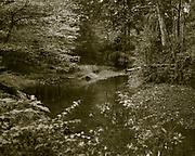 Young's Branch, Manassas Battlefield National Park, Virginia.