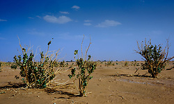 the desert near Lake Iriki, Souss-Massa territory, Morocco<br /> <br /> (c) Andrew Wilson | Edinburgh Elite media