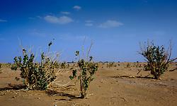 the desert near Lake Iriki, Souss-Massa territory, Morocco<br /> <br /> (c) Andrew Wilson   Edinburgh Elite media