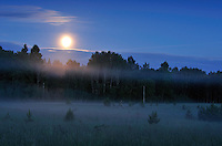 Moonlight in Kemeri National Park, Latvia