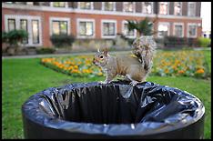 Squirrel in London Park