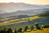 Chianti rural landscape at sunset. Tuscany, Italy