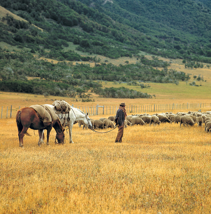 A lone shepherd surveys his flock in Magellanes State in southern Chile.