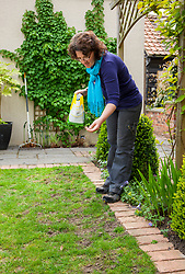 Sowing seed to repair bare patches on a lawn