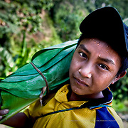 Víctor Velázquez is 14 years old and left school when he was 11 in order to go and work in his uncle Lázaro's cocoa plantation. In 2005 his parents emigrated to North Carolina in the United States, after hurricane Stan swept through Chiapas. Mexico.