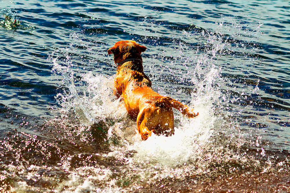 Just more fun shots of this dog having a great time playing in Lake Superior chasing sticks that his owner was throwing...Grand Marais is a city in Cook County, Minnesota, United States. The harbor village of Grand Marais, Minnesota is on the North Shore of Lake Superior.