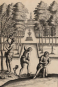 Gardeners at work. The man on the left is using a sharp knife, perhaps to remove a bud for grafting, while the man on the rights is grafting new wood on to the stump of a tree, a procedure often followed when it was necessary to rejuvenate an old tree.  Engraving from an 18th century edition of Virgil's 'Georgics'.