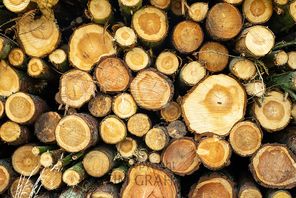 Log pile freshly sawn timber of chopped branches, England, UK