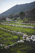 Spring and greenness arrives after forest burns, Galicia, Spain Ⓒ Davis Ulands   davisulands.com