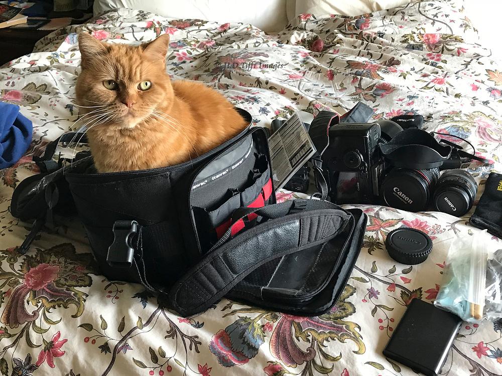 My cat climbed into my camera bag as I packed.