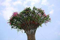 August 6, 2017 - Guangzhou, Guangzhou, China - Guangzhou, CHINA-August 6 2017: (EDITORIAL USE ONLY. CHINA OUT) Three 30-meter-tall giant bouquets can be see on street in Guangzhou, south China's Guangdong Province, August 6th, 2017. (Credit Image: © SIPA Asia via ZUMA Wire)