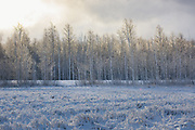 Snow covers landscape of agricultural field and meadow with forest in distance, Vidzeme, Latvia Ⓒ Davis Ulands | davisulands.com