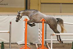 198 - Cavalia<br /> KWPN Paardendagen Ermelo 2010<br /> © Dirk Caremans
