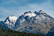 A helicopter flies towards Hedin Peak 2135m above the Dart Valley and Rees-Dart Track. In 5 days, we tramped the strenuous Rees-Dart Track for 39 miles plus 12.5 miles side trip to spectacular Cascade Saddle, in Mount Aspiring National Park, Otago region, South Island of New Zealand.