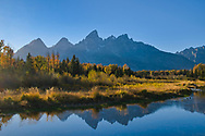 The sun sets behind the Grand Teton and lights the fall colors on the bank in a beautiful way.