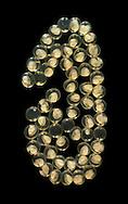 Ramshorn Snail eggs - Planorbis planorbis