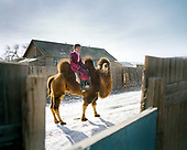 Camels in the winter - Gobi