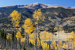 Aspens leaves in autumn above Costilla Reservoir, Vermejo Park Ranch, New Mexico, USA.