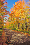 Fall color along dirt road on the north shore of Lake Superior, Superior National Forest, Minnesota