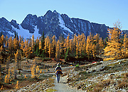 Grasshopper Pass, Pacific Crest National Scenic Trail, Okanogan National Forest, North Cascades mountain range, Washington, USA. The needles of deciduous larch trees turn gold in the fall.