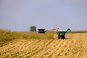 05 SEPTEMBER 2020 - STORY CITY, IOWA: A crew harvests corn on a farm near Story City, in Story County, Iowa. This year's corn harvest has been devastated by August's derecho wind storm that flattened millions of acres of Iowa corn fields, a drought that has left fields in the center of the state parched and desiccated. Farmers are also contending with a bad farm economy. Export sales are down because of trade problems with China, Iowa's largest foreign trade partner, and the ethanol industry has been crippled by cheap oil, which has lessened the need for ethanol. Some Iowa farmers are not expected to harvest their crop this year, instead plowing it under.         PHOTO BY JACK KURTZ