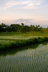 Indonesia: Bali: Rice paddy, rice field, newly planted rice, and Mt. Agung,  Photo: baliin101.Photo copyright Lee Foster, 510/549-2202, lee@fostertravel.com, www.fostertravel.com