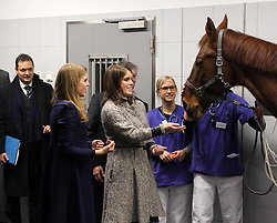 Princess Beatrice (L) and Princess Eugenie feed a horse with a heart condition called Ben as they visit the Equine Clinic at the University of Veterinary Medicine, Hanover, Germany, January 18, 2013. Photo by Imago / i-Images...UK ONLY