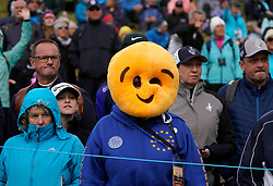 Auchterarder, Scotland, UK. 14 September 2019. Saturday morning Foresomes matches  at 2019 Solheim Cup on Centenary Course at Gleneagles. Pictured; Team Europe fan in the crowd. Iain Masterton/Alamy Live News