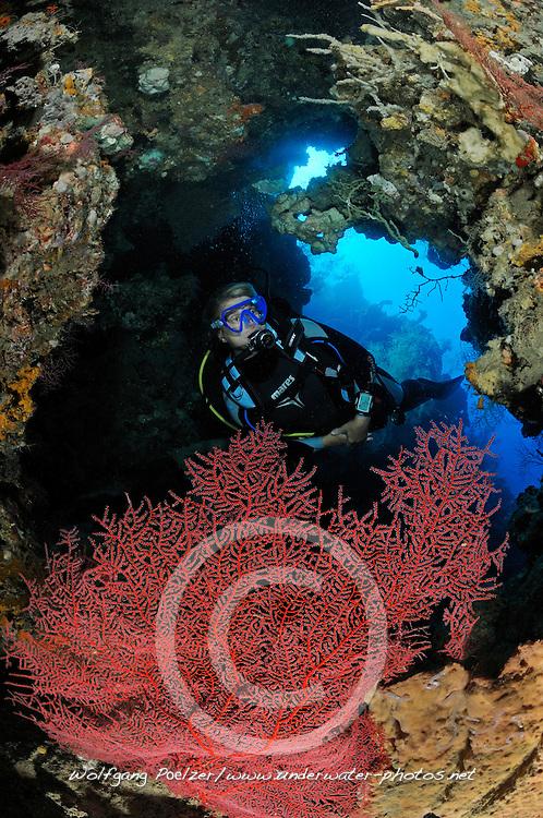 Taucherin in Grotte mit roter Faecher Gorgonie, scuba diver in cavern with red gorgonian fan, Bali, Indonesien, Indopazifik, Bali, Indonesia Asien, Indo-Pacific Ocean, Asia