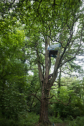 HS2 Rebellion tree protectors climb a mature oak tree in Denham Country Park in order to try to prevent its felling as part of works for the HS2 high-speed rail link on 7 September 2020 in Denham, United Kingdom. Anti-HS2 activists continue to try to prevent or delay works on the controversial £106bn project for which the construction phase was announced on 4th September from a series of protection camps based along the route of the line between London and Birmingham.
