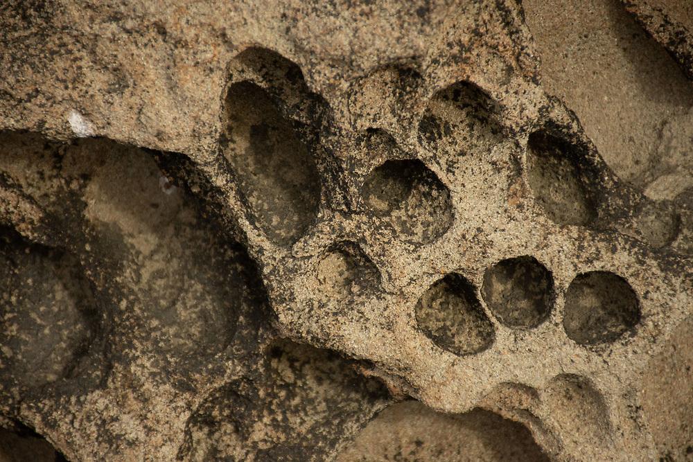 Piddock Clam Pockmarks on Sandstone, Kalaloch Beach 4, Olympic National Park, Washington, US