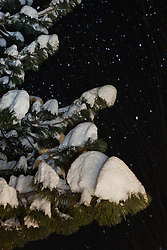 """""""Snowy Tree at Night"""" - This snow covered tree was photographed during a snowstorm in the Tahoe Donner area of Truckee, CA."""
