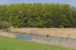 Harderhoek, Flevoland, Netherlands