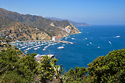 Catalina Island Coastline