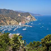 Catalina Island Stock Photos