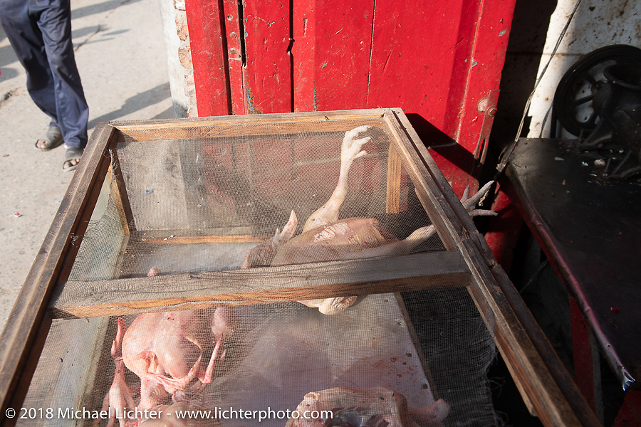 Poultry monger in Kathmandu after our Himalayan motorcycling adventure, Nepal. Friday, November 16, 2018. Photography ©2018 Michael Lichter.