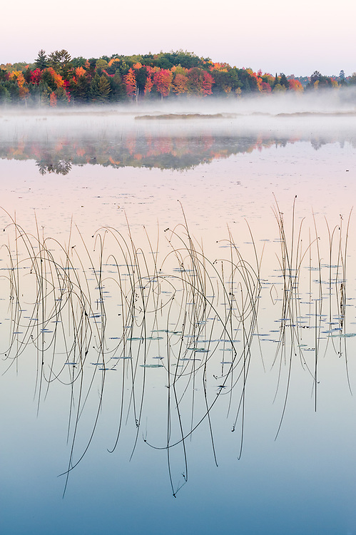Conner's Marsh State Wildlife Management Area, morning light, October,  Crawford County, Michigan, USA