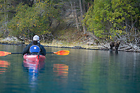 Young woman watching grizzly bear while kayaking on  Chilko Lake. British Columbia, Canada