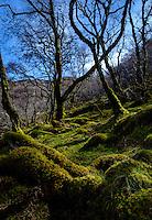 SCOTLAND - CIRCA APRIL 2016: Trees and moss field near Tarskavaig in Skye an Island in Scotland