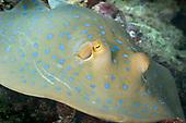 Underwater  Miscellaneous