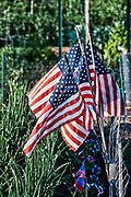 American flags in a community garden.