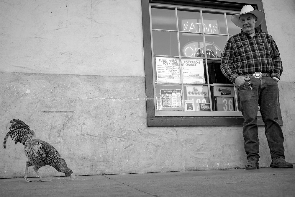 A man watches a feral rooster peck for food on Third Street in San Juan Bautista, Calif. on Dec. 26, 2018.