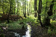Europa, Deutschland, Nordrhein-Westfalen, Koeln, der Kalmusbach in der Wahner Heide. - <br /> <br /> Europe, Germany, Cologne, North Rhine-Westphalia, the Kalmus brook in the Wahner Heath.