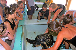 Loggerhead Turtle At S. F. S.